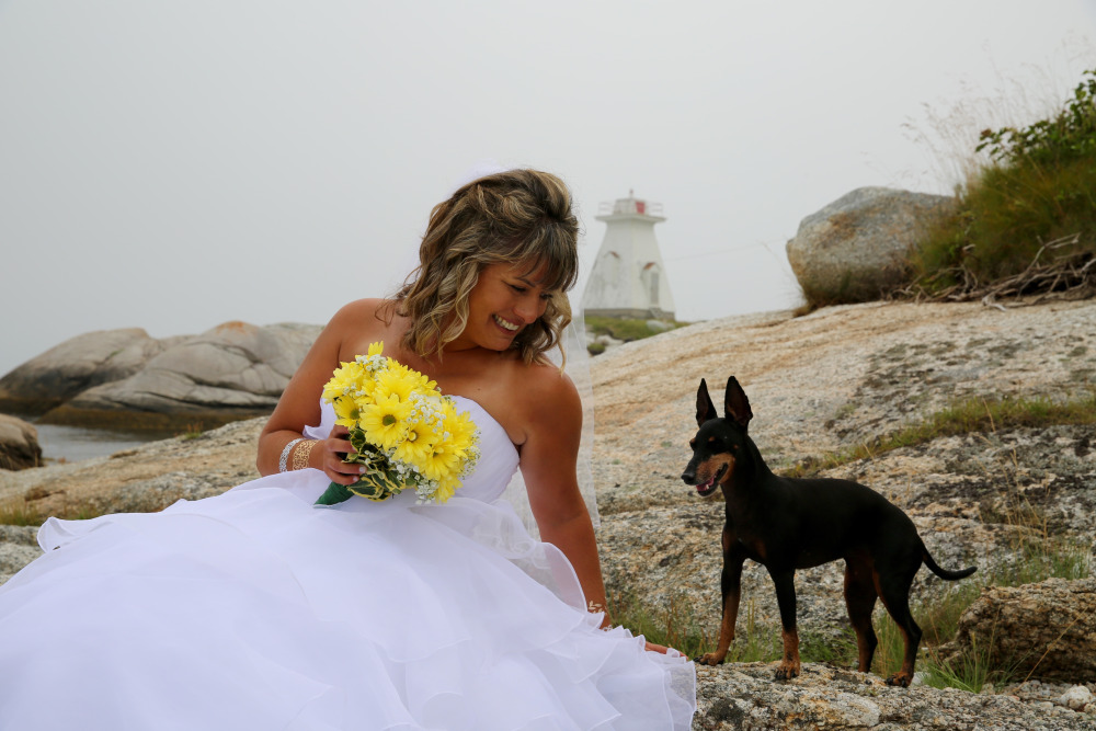 August 18th, 2015 - Wedding Day! Marlow, my Toy Manchester Terrier. February 18, 2018, at 14 years of age, my beloved Marlow crossed The Rainbow Bridge