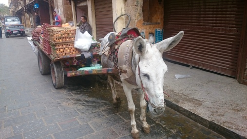 Fruit.......on a donkey drawn cart!!