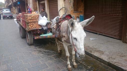 Fruit.......on a donkey drawn cart!!