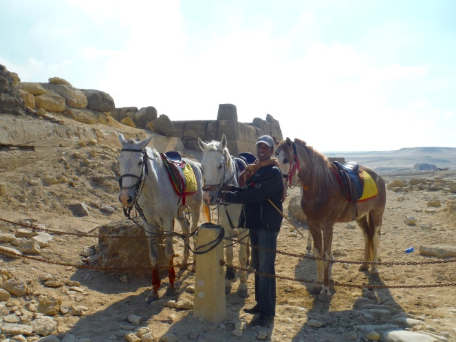 Mohammed with our horses!