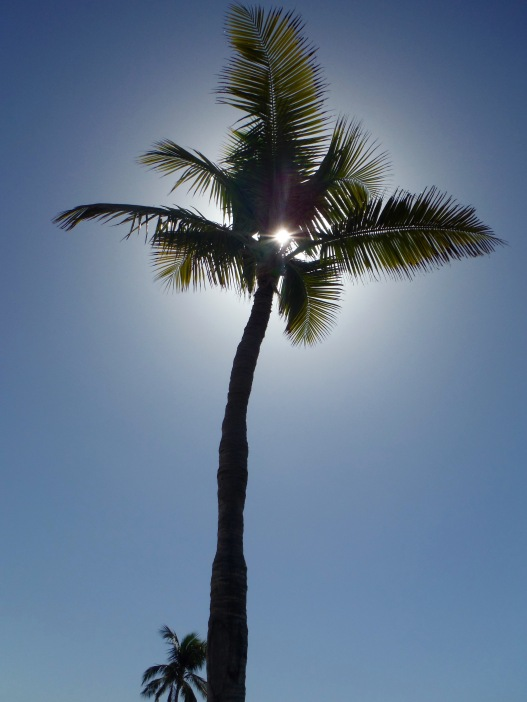 We sat under the shade of this palm tree.