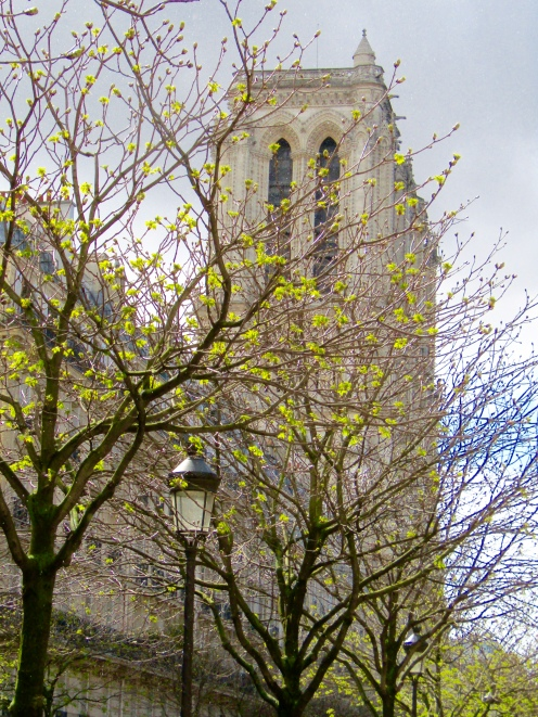 We turned a corner on Ile de la Cite and beyond the blossoms of springtime are the towers of Notre Dame!!!