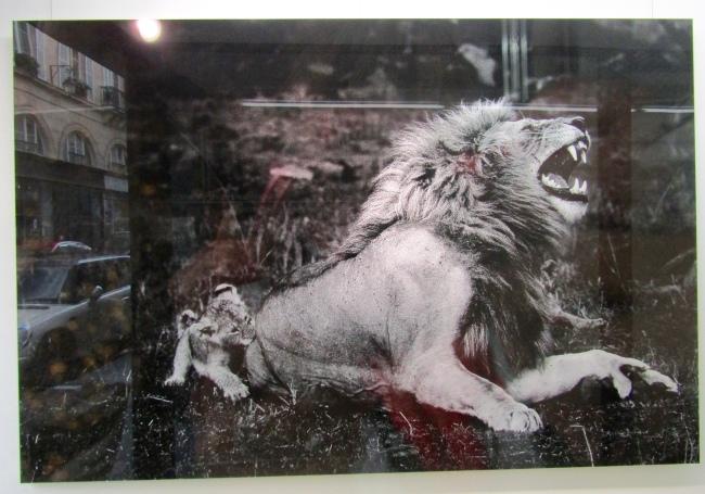 Lion - Kenya - Yann Arthus-Bertrand