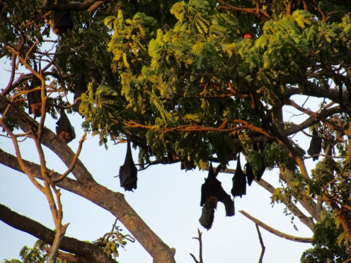 Bats in the tree!!