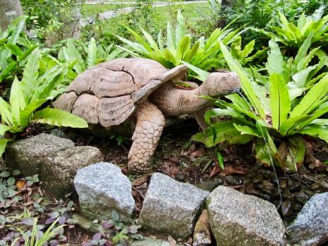Turtle Statue....