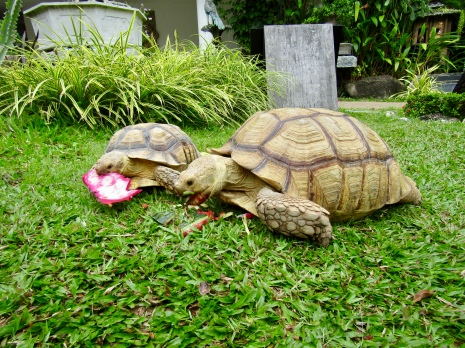 Real turtles!!!!!!