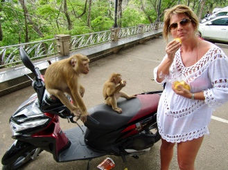 Monkeys on our scooter...