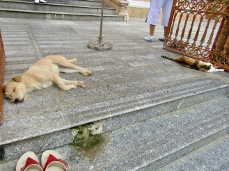 This was so wonderful - a cat and a dog lay sleeping at the main door of the temple.