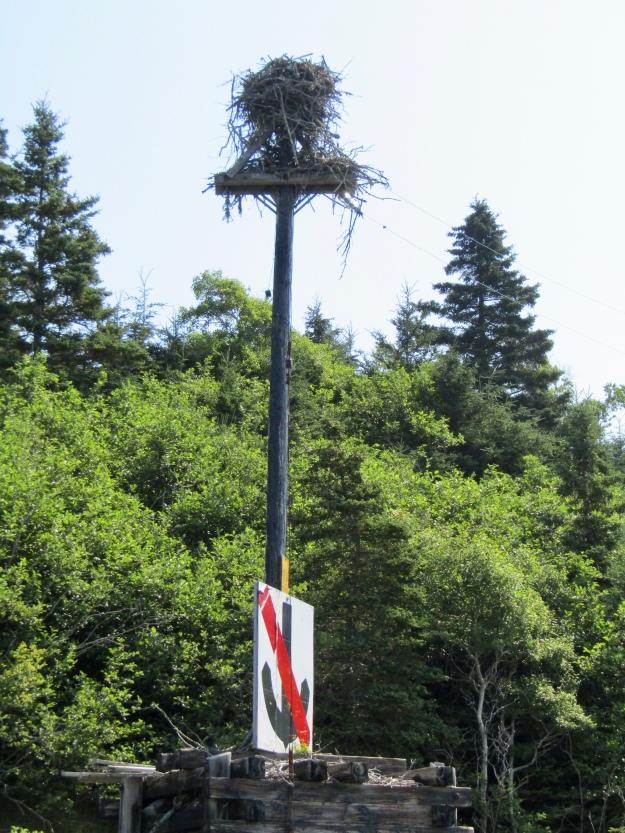 Osprey Nest on Lawlor Island