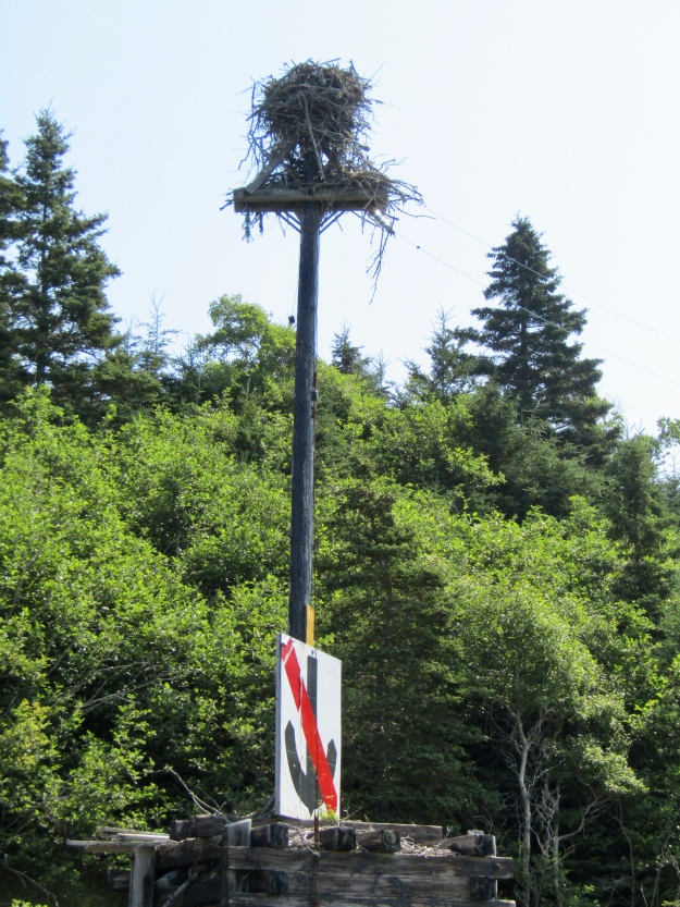 Osprey Nest on Lawlor Island