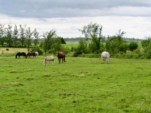 Her horses!