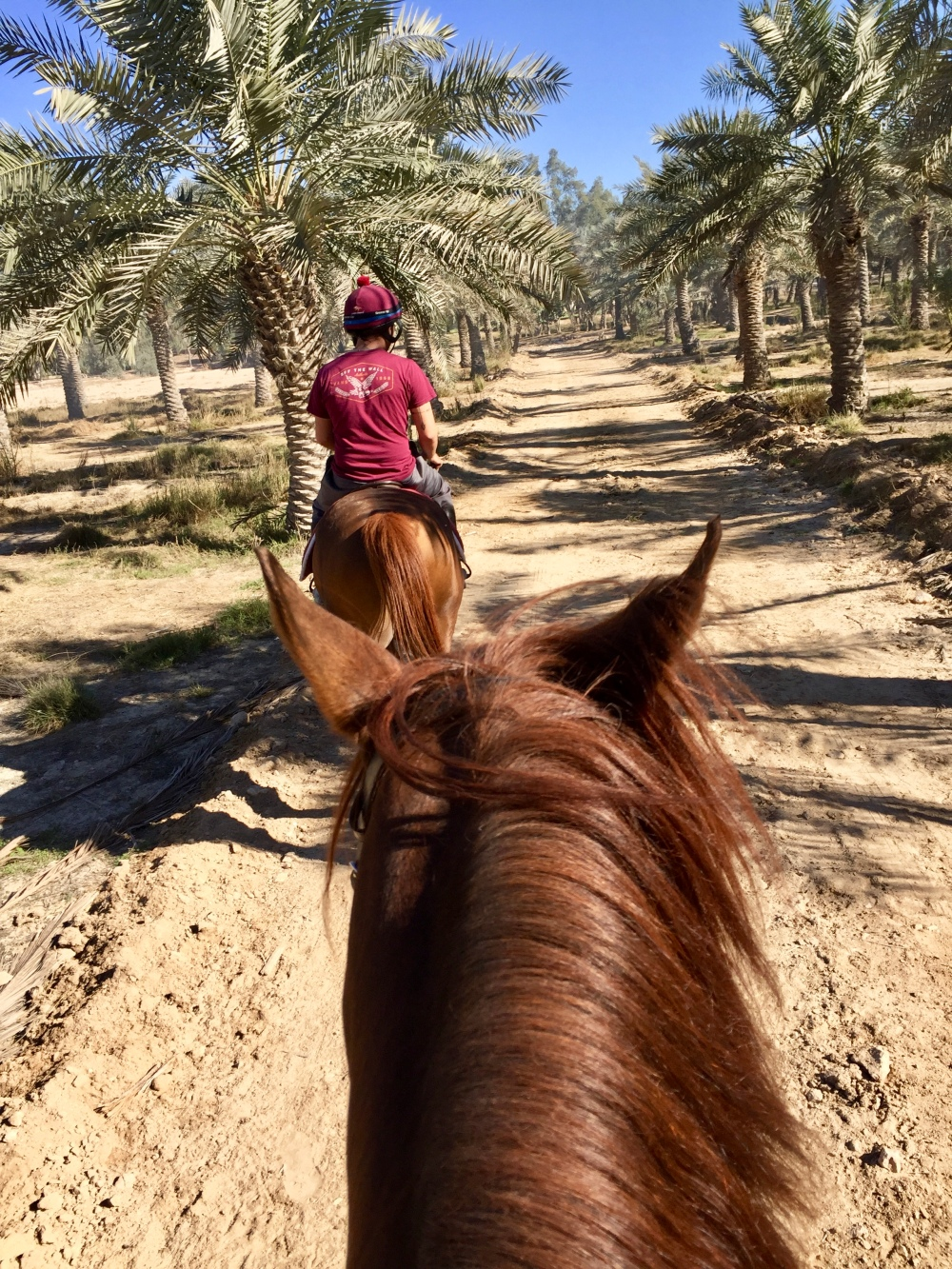 Al Samariyah Equestrian Centre - Hack Ride on Patcher on Sheik Faisal's Estate