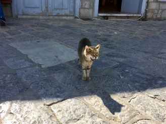 June, 2018 - Hydra, Greece - Local cat