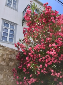June, 2018 - Hydra, Greece - Pink flowers