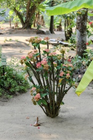 Carnoustie - Garden