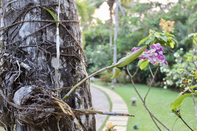 Carnoustie - Orchid tied to Tree