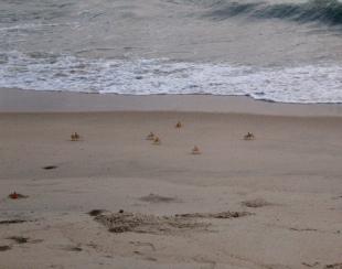 Carnoustie - Thiruvizha Beach