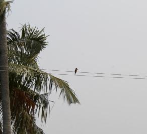 Kerala - Kingfisher