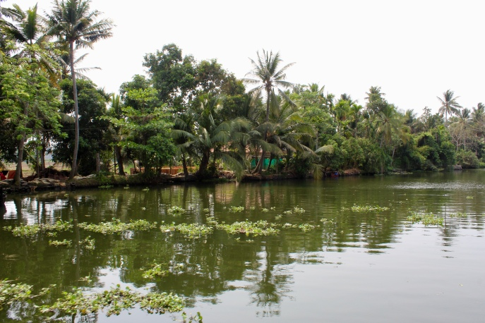 Kerala - Greenery