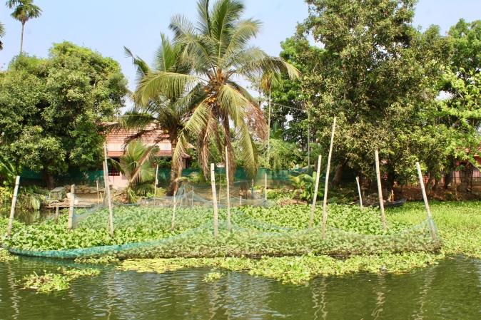Kerala - Water Garden