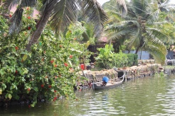 Kerala - Backwaters - Boats