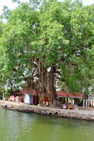 Kerala - Gorgeous Old Looking Tree