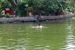 Kerala -Swimming