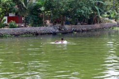 Kerala -Swimming