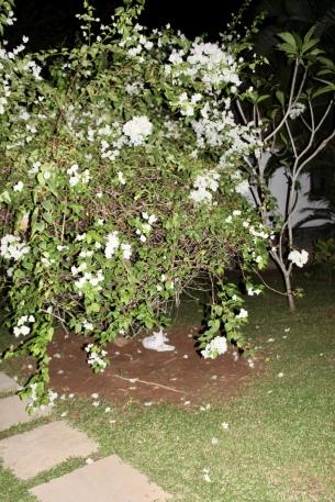 Carnoustie - Kitty under Tree