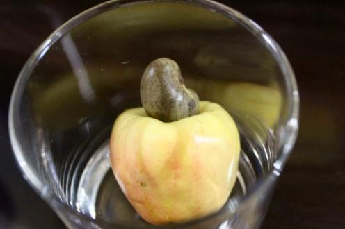 Carnoustie - Cashew