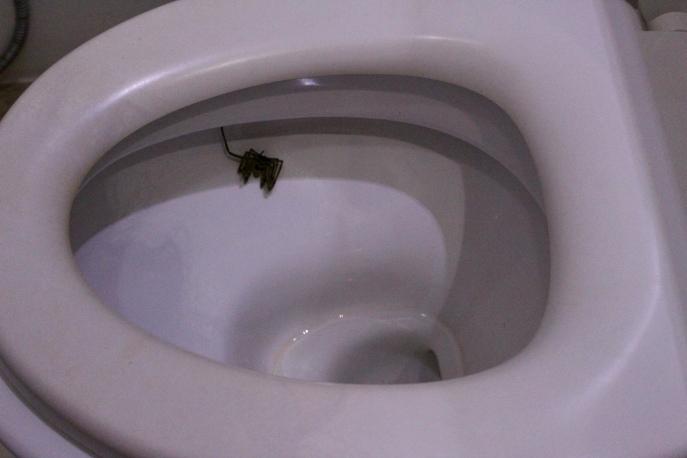 Carnousite- Spider in Toilet!