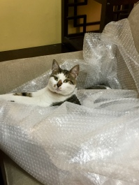 Bob in the bubble wrap!