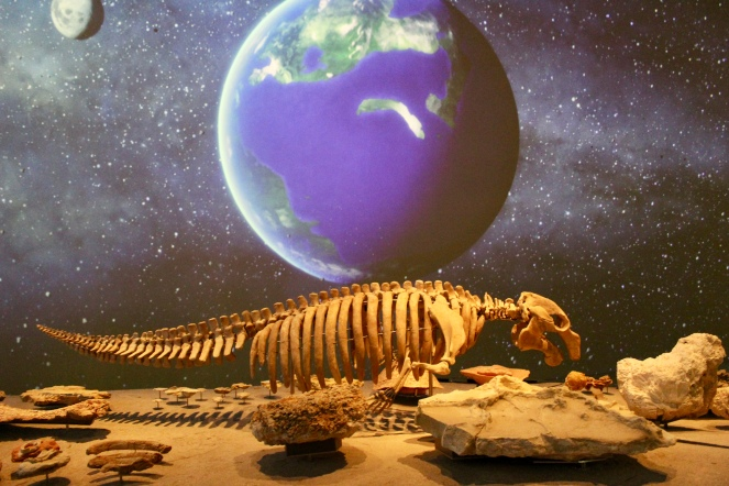 Dugong skeleton