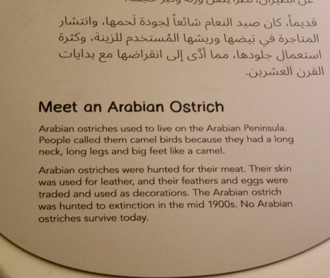 About the Arabian Ostrich