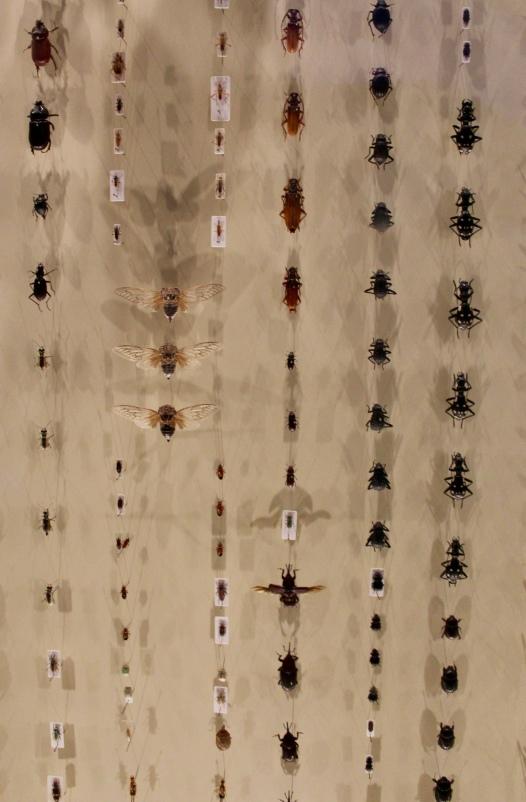 Bugs!!