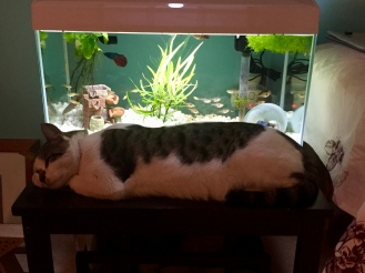 Bob chilling with the fish...