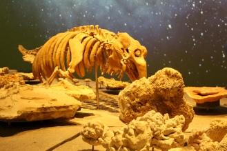 Dugong skeleton, crystals and rocks