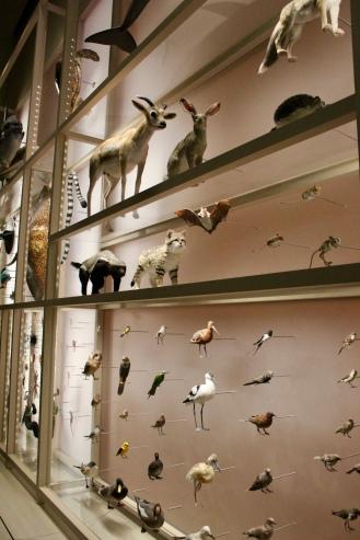 Qatar Flora and Fauna
