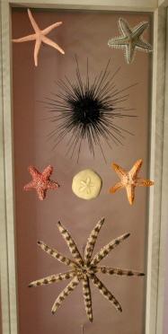 Star fish and sea urchins