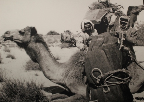 Camel and riders before the discovery of oil.