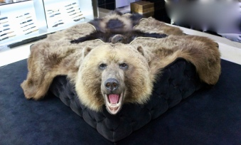 Bear and wolverine rugs
