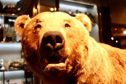 Russian Brown Bear