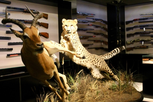 Another leopard attacking a gazelle