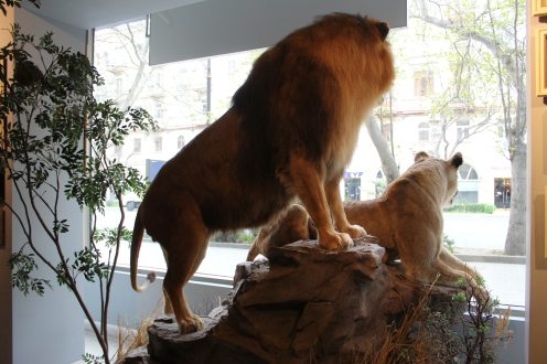 The crowning glory window display of a lion and lioness
