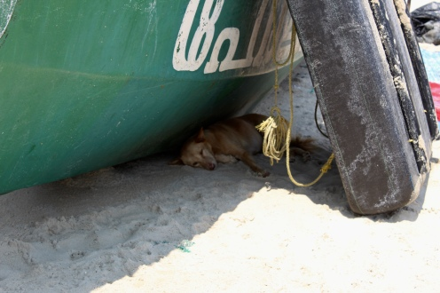 Another sleepy dog having a nap in the shade!