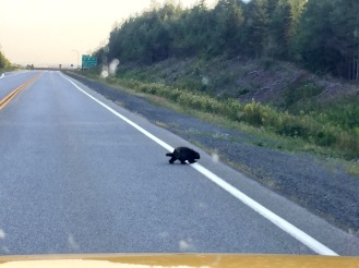 2019 - Highway 107, Nova Scotia - Porcupine Crossing!