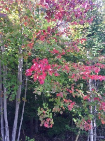 Upper Vaughn, Nova Scotia - Autumn Leaves