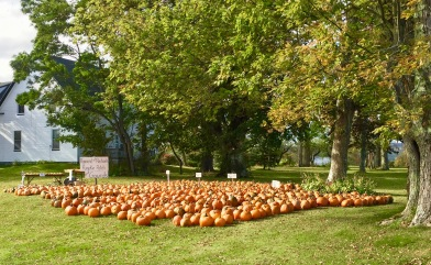 Windsor Forks - Pumpkins for sale!