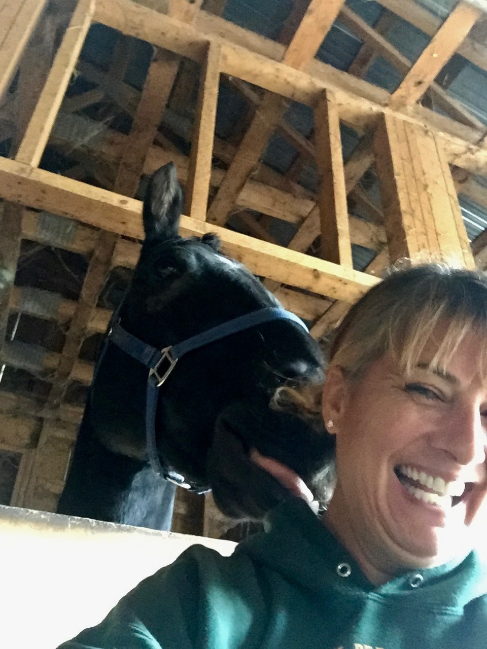 2019 - Standing outside of Sooty's stall, giving Reiki to another horse, Portia - Sooty started nibbling at my hair! I pulled my phone out of my pocket to take these pictures!