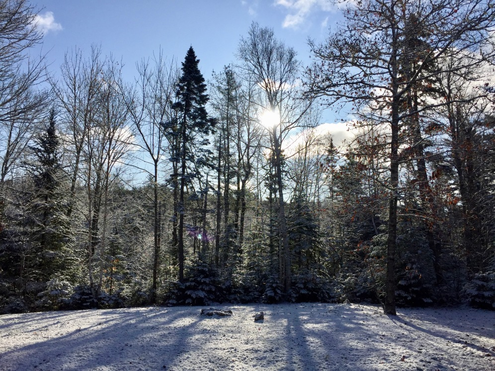 2019 - Windsor, Nova Scotia - Sun rising through the snow dusted forest